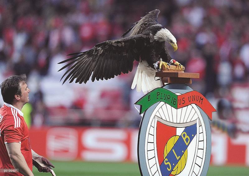 الطيور على أنواعها شعار لأندية القارة العجوز Elmarada